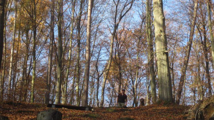 Kurpark Bad Suderode