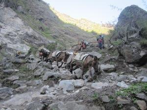 Nepal 203