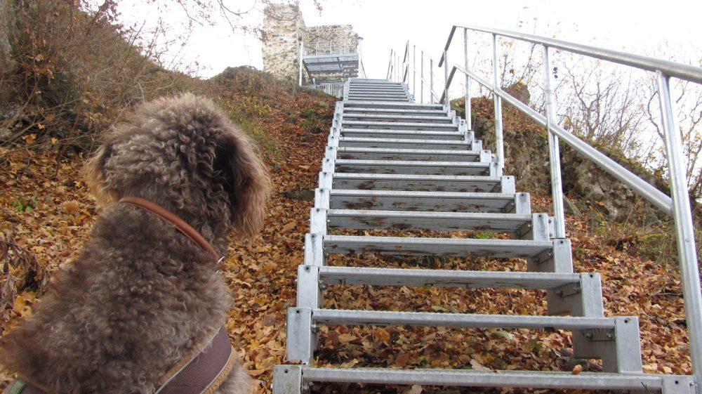Anwolf - Unterwegs bei der Stecklenburg
