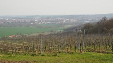 Weinberge Naumburg