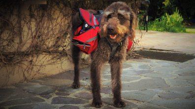 Hunderucksack Ruffwear