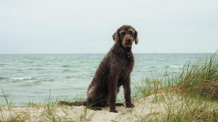 Anwolf - Unterwegs am Meer
