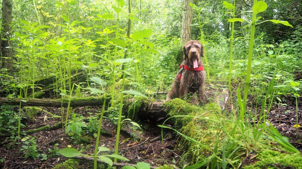 Anwolf - Unterwegs auf der Suche nach den Blüten