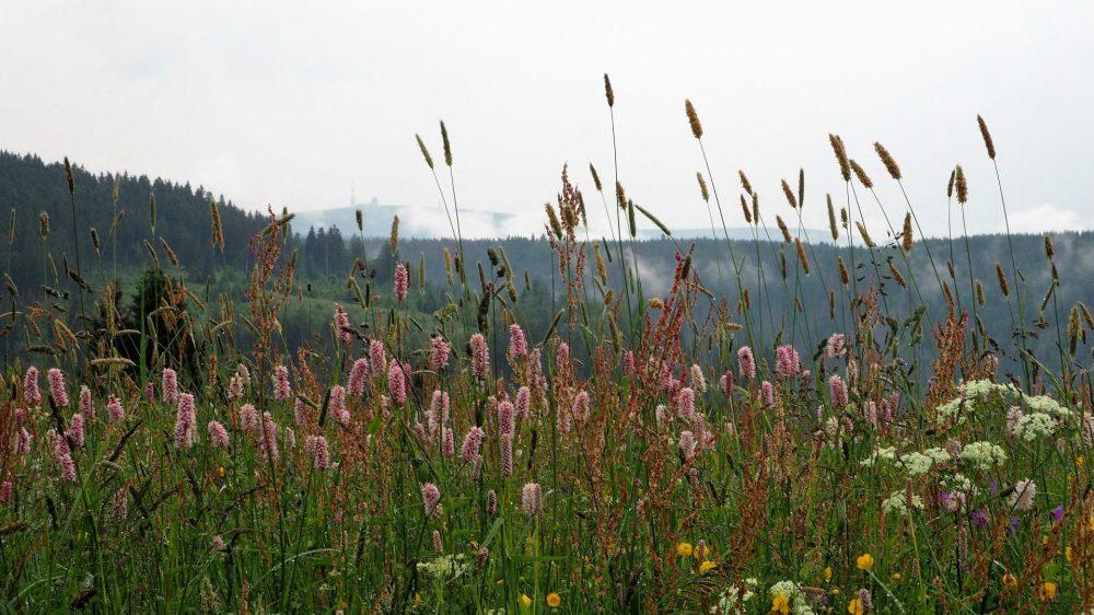 Blumenwiesen St. Andreasberg