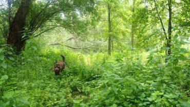 Wildnis bei Schladen