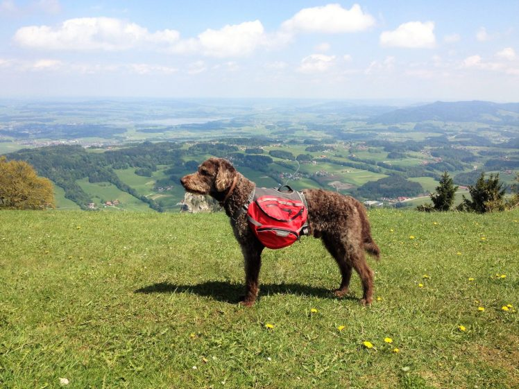 Anwolf - Rucksack packen für den Meraner Höhenweg