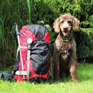 Packliste Blogger