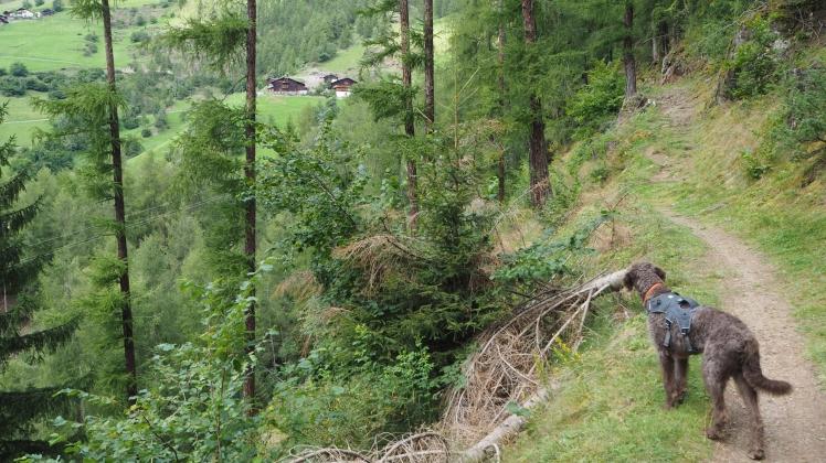 Etappenziel Montferthof