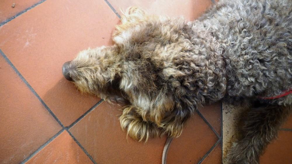 bobby-im-tiefschlaf