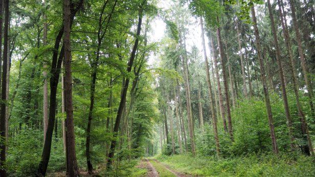 Buchenwald Elm-Lappwald