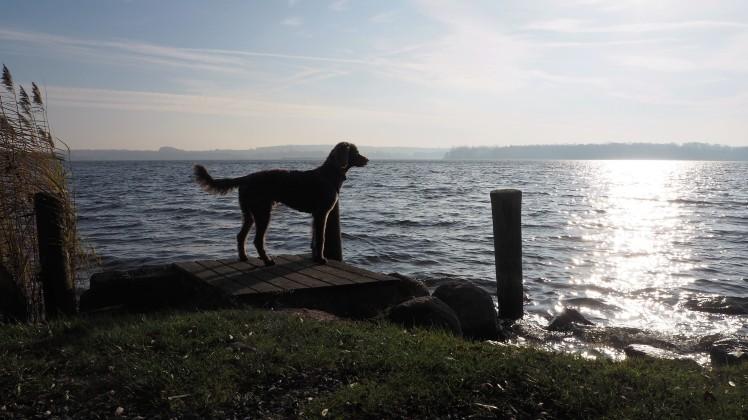 ... doch noch ein Weitblick über den Dobersdorfer See