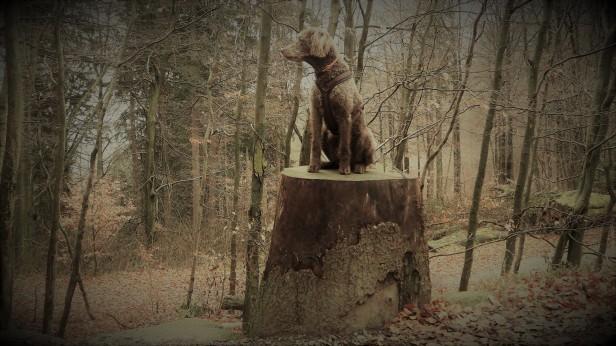 vier Stempel der Harzer Wandernadel für den Harzer Wanderkaiser in spe bei Bad Harzburg