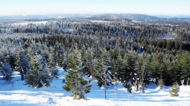 Winterwunderland im Harz