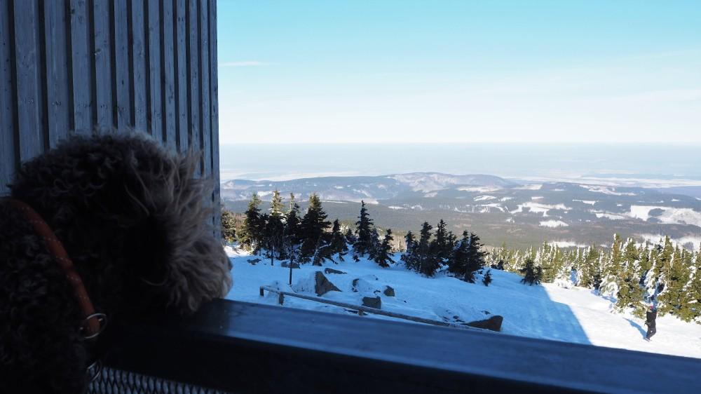 Anwolf - Unterwegs auf dem Brocken
