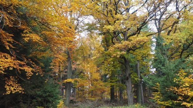 Mischwald bei Ilsenburg