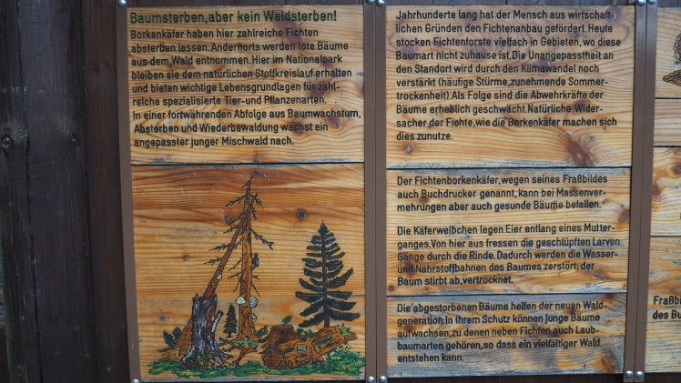 harz-borkenkaefer11
