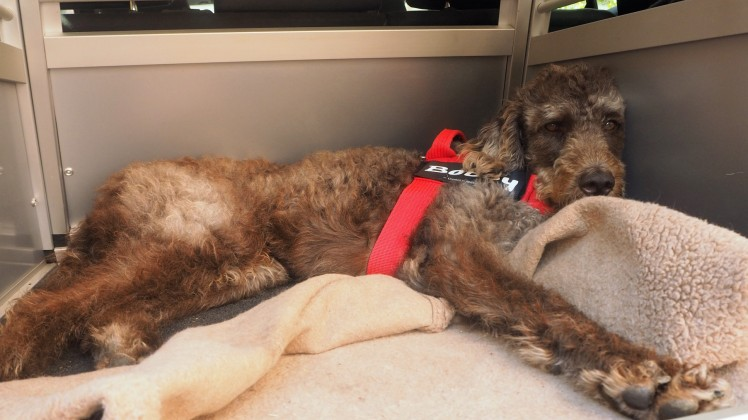 Bobby hat eindeutig die größte Beinfreiheit während der Fahrt.
