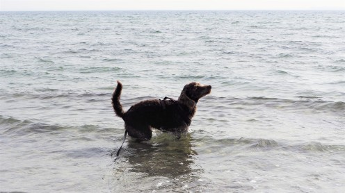Scharbeutz Hund 10