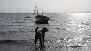 Scharbeutz Hund 9