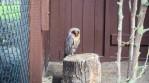 Vogelpark Niendorf 4