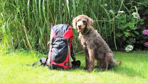 Roadtrip Polen mit Hund