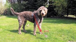 Wohnmobil Hund