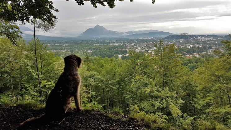Aussichtspunkt Jägerhöhe