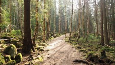 Oberharzer Klippenweg