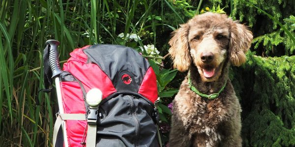 Anwolf – Unterwegs auch mit Hund