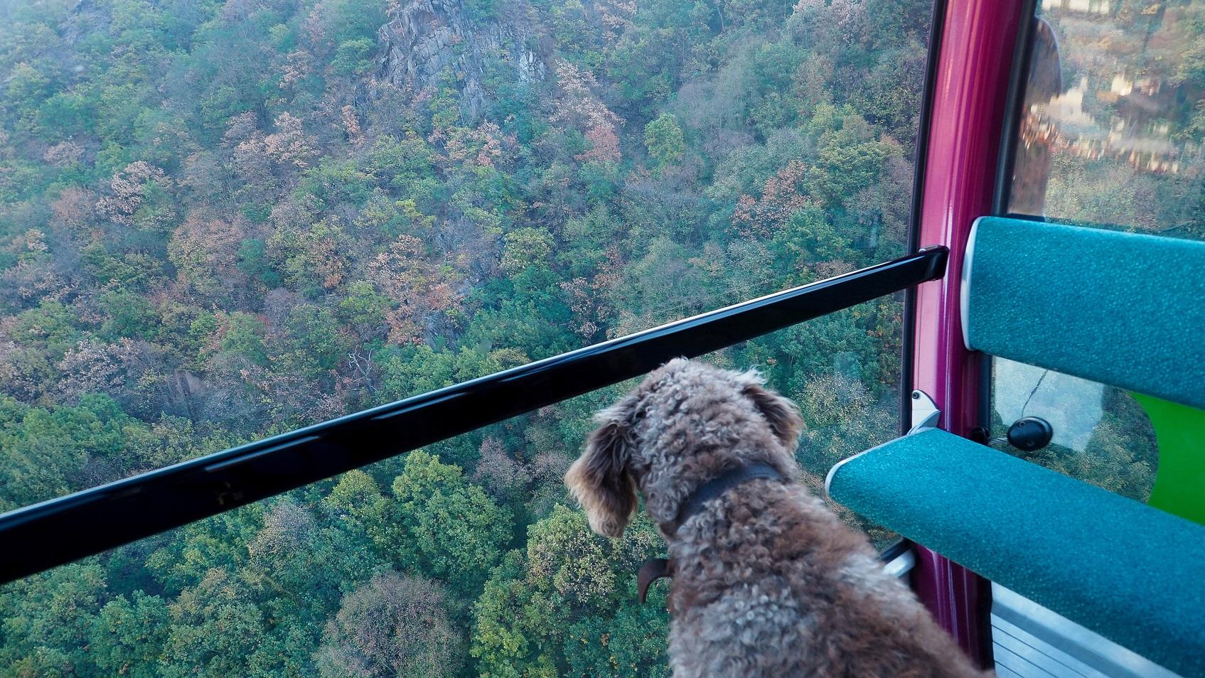 Bodetal Inside Wild und einsam am Grand Canyon des Harzes ...
