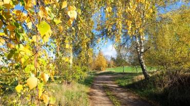 """Herbstrauschen an den """"Hörniger Sattelköpfen"""" (HWN 99)"""