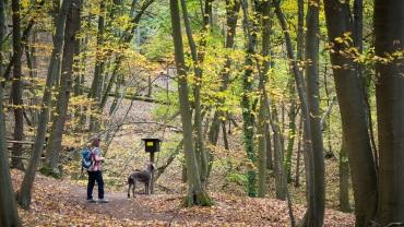 """""""Reesbergdoline"""" (HWN 114): Löcher und Höhlen im Karstgestein des Südharzes"""