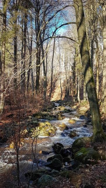 Wanderetipp Harz Ilsetal (5)
