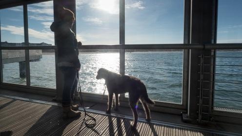 Heiligenhafen mit Hund (14)