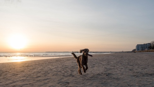Scharbeutz mit Hund (3)