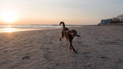 Scharbeutz mit Hund (4)