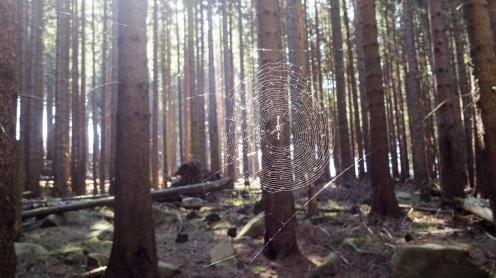 Alexanderstieg Harz (1)