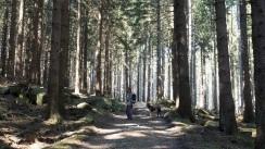 Alexanderstieg Harz (4)