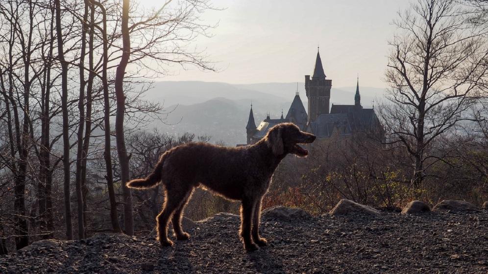 Sonnenuntergang Schloss Wernigerode (5)