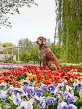 Lüneburger Heide mit Hund