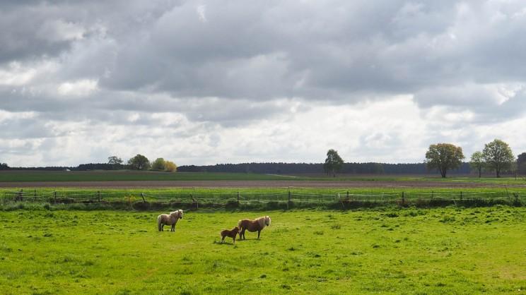 Naturerlebnispfad Lüneburger Heide (1)