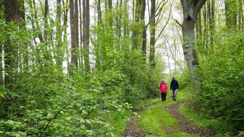 Naturerlebnispfad Lüneburger Heide (3)