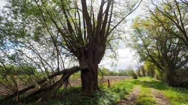Naturerlebnispfad Lüneburger Heide (5)