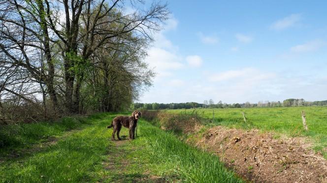 Schweimker Moor Lüneburger Heide (2)