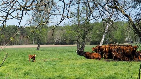 Schweimker Moor Lüneburger Heide (7)