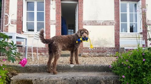 Yport mit Hund (2)