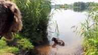 Meissendorfer Teiche mit Hund (18)