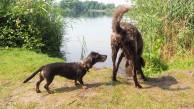 Meissendorfer Teiche mit Hund (19)