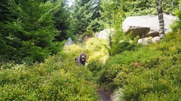 Wandern am Hohnekamm Harz (10)