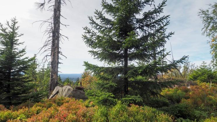 Wandern am Hohnekamm Harz (12)